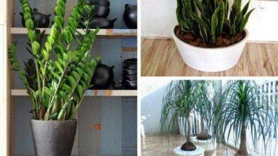 11 Plantas para colocar dentro de casa e que não precisam de muita água