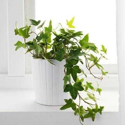 5 Plantas para ficar no seu quarto e ajudar você a dormir melhor