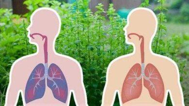 6 ervas que matam vírus e bactérias e eliminam o muco dos pulmões rd