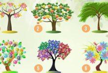 Escolha uma árvore e nós revelaremos seus traços de personalidade dominante! S