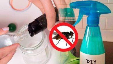 Misture estes ingredientes, aplique na sua casa e adeus moscas para sempre 1