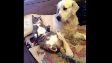 Foto de A reação do cão quando descobre que o gato está dormindo com ele é muito engraçada