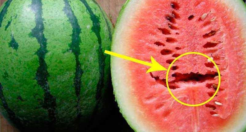 ATENÇÃO: Se você encontrar essas rachaduras na melancia. NÃO COMA