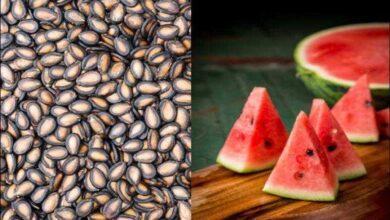 Foto de Confira os benefícios da semente de melancia