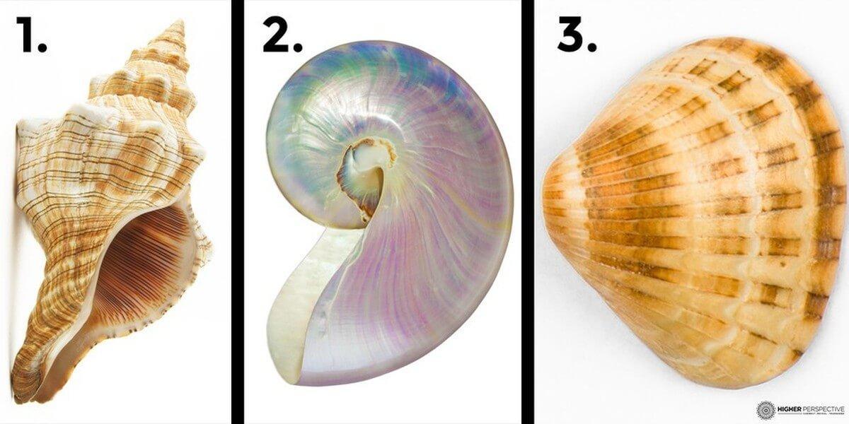 Escolha uma das três conchas e veja o que ela revela sobre você