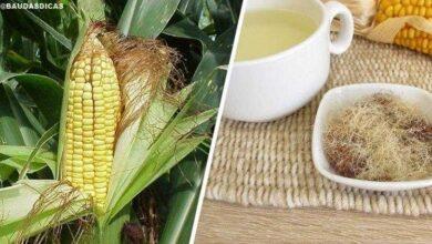 Conheça o poder medicinal da barba de milho