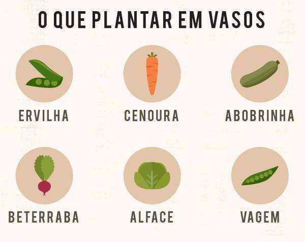 12 VERDURAS E LEGUMES PARA PLANTAR EM VASOS
