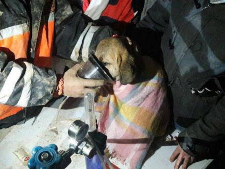 Depois de ouvir gemidos por 11 dias, retiraram um filhote de cachorro de um poço de 70 metros