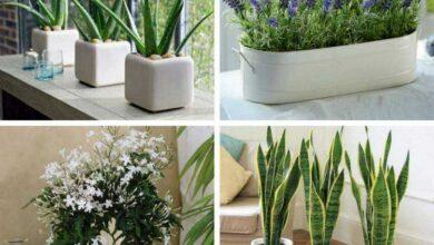 Foto de 4 plantas que você deve ter em seu quarto para dormir bem