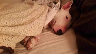 A reação de uma cadela resgatada desfrutando de uma cama pela primeira vez