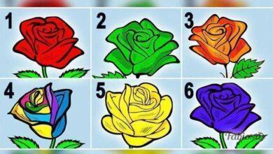 Foto de Escolha a rosa que mais te agrada e segredos sobre a sua personalidade serão revelados