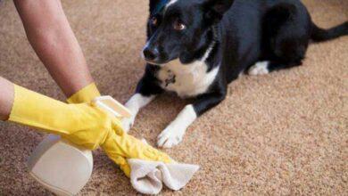 Como fazer Spray para tirar cheiro de cachorro da casa