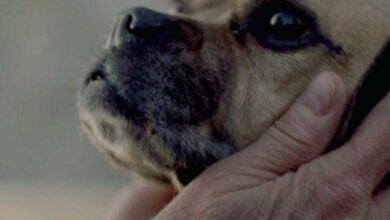 Este vídeo de 1 minuto precisa ser visto por todos os amantes de cães