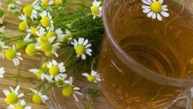 Photo of Tudo sobre o relaxante chá de camomila