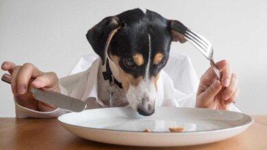Foto de 8 alimentos recomendados por veterinários que você precisa começar a dar ao seu cão!