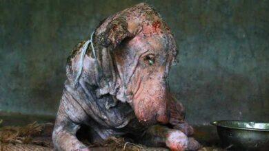 Foto de Transformação de cão com sarna impressiona seus cuidadores