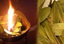 Foto de 3 benefícios de queimar folhas de louro em sua casa