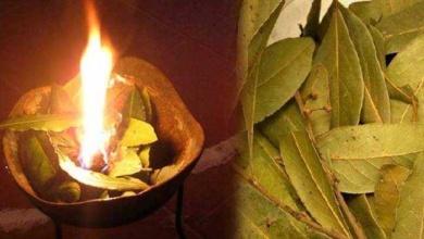 3 benefícios de queimar folhas de louro em sua casa d