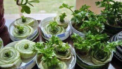 Foto de 7 vegetais para você plantar uma vez e que crescerem para sempre