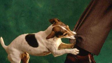 Foto de Cães conseguem identificar um autêntico mau caráter