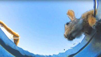 Foto de Ele esconde a câmera no balde da água para ver quem vem beber, e o resultado impressiona