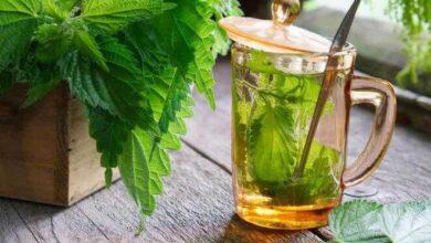 Chá de urtiga pela manhã melhora digestão, reduz fome e até mau hálito 1S