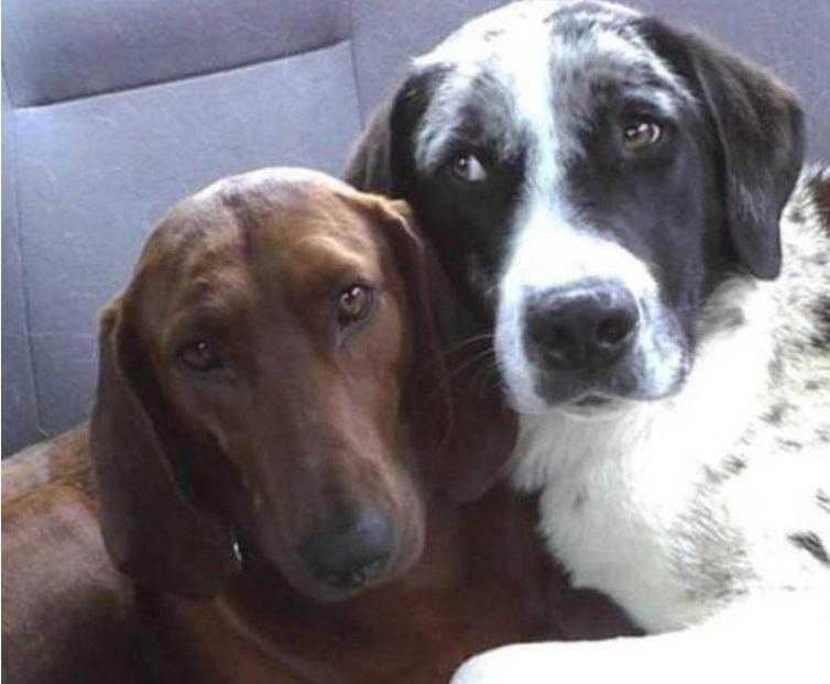 cão de abrigo prestes a ser adotado se recusa a ir embora sem seu melhor amigo 1 Cão de abrigo prestes a ser adotado se recusa a ir embora sem seu melhor amigo