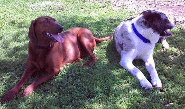 cão de abrigo prestes a ser adotado se recusa a ir embora sem seu melhor amigo 2 Cão de abrigo prestes a ser adotado se recusa a ir embora sem seu melhor amigo