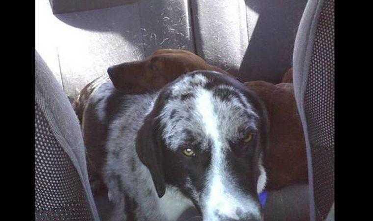 cão de abrigo prestes a ser adotado se recusa a ir embora sem seu melhor amigo 3 Cão de abrigo prestes a ser adotado se recusa a ir embora sem seu melhor amigo