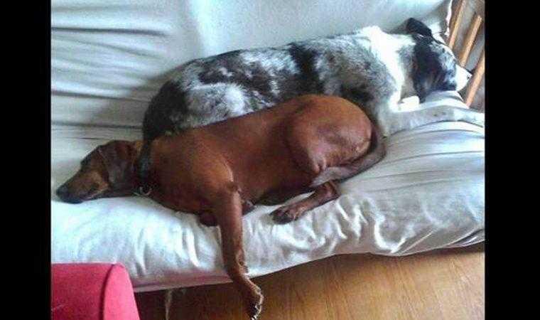 Cão de abrigo prestes a ser adotado se recusa a ir embora sem seu melhor amigo