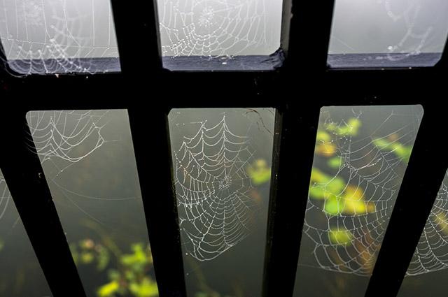 As teias de aranha aparecem em portas, janelas, quinas de paredes e teto