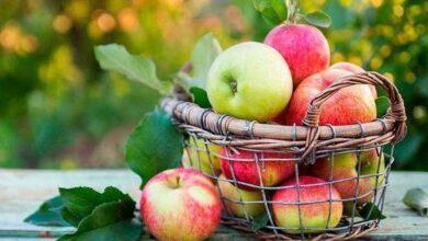 Foto de Os benefícios de comer uma maçã por dia