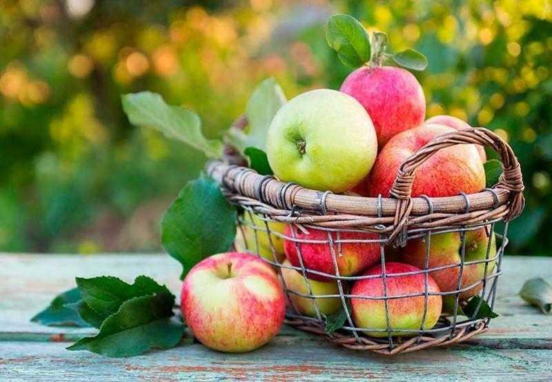 Os benefícios de comer uma maçã por dia