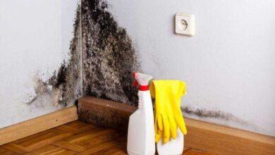 Pulverize isto e nunca mais vai ter mofo novamente nas parede