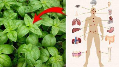 Foto de Saiba por que o manjericão é a planta mais mágica que já existiu!