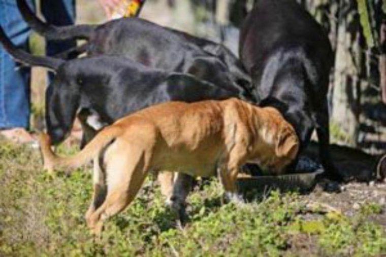 Cadela aterrorizada não para de abraçar seus salvadores   Baú das DICAS