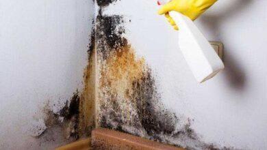 Foto de 7 dicas caseiras para acabar com o mofo em casa