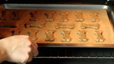 Como fazer deliciosos e saudáveis biscoitos para cães