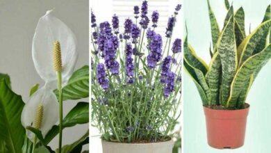 5 plantas que são ótimas para ter no quarto e ajudam a pegar sono