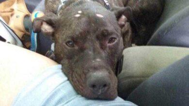 Foto de Cão chora ao ser abandonado em um abrigo e agora está procurando uma nova casa