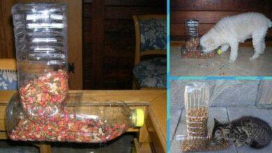 Foto de Como fazer comedouro para cães e gatos com garrafas PET