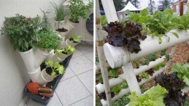 Foto de Como fazer horta com canos PVC