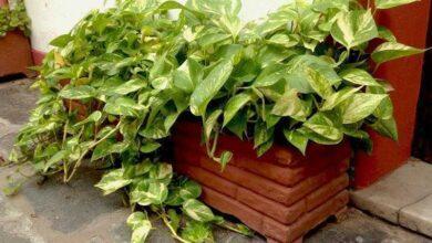 Foto de Conheça a planta que purifica o ar da sua casa