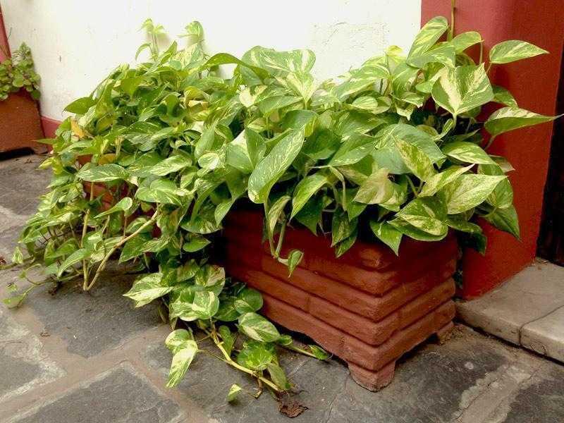 Conheça a planta que purifica o ar da sua casa