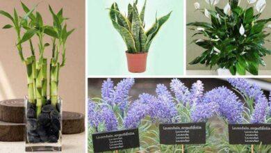 Foto de 11 plantas que podem ser cultivadas no escritório para reduzir o estresse