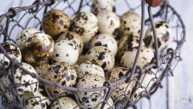 9 Benefícios do ovo de codorna