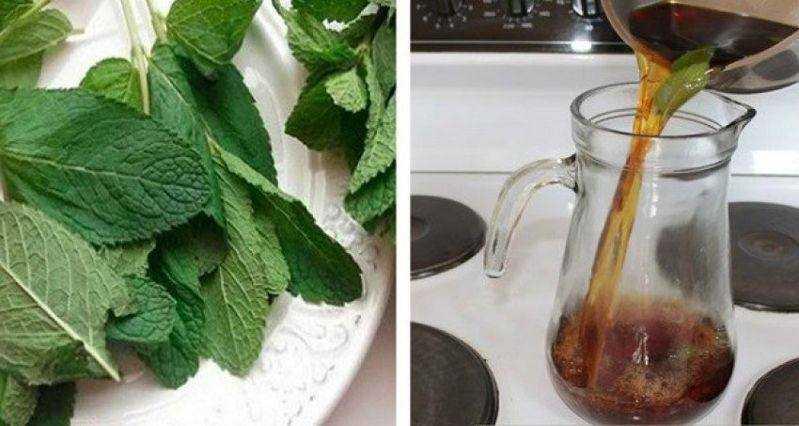 Bebida natural para deixar seu fígado novinho em folha