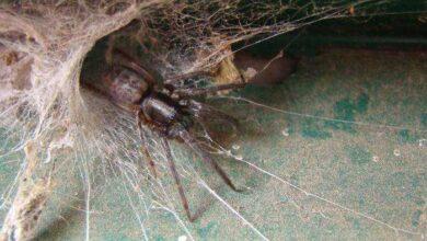 Foto de Como acabar com teias de aranha em casa