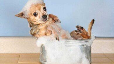 Shampoo caseiro para cães e gatos