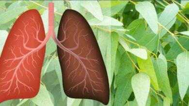 7 Ervas que combatem viroses, infecções, estimulam o sistema imunológico